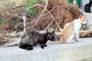 Stray cats sitting on a concrete wall.