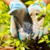A gloved hand sprinkling fertilizer in a garden.