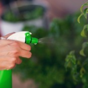 A person using a spray bottle on plants outdoors.