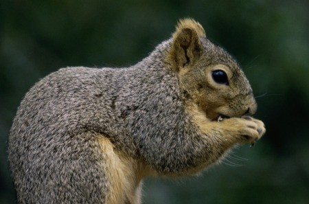 Close up of a squirrel.