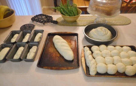 Different shaped bread and rolls, ready to bake.