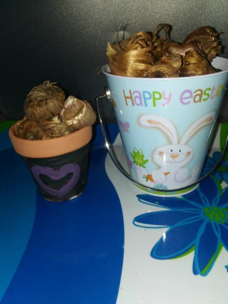 Gardener's Easter Basket - two flower pots filled with bulbs