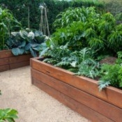 Beautiful raised garden beds filled with plants.