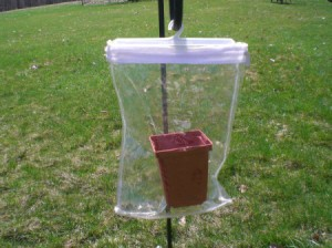 Use Plastic Zipper Bags as Mini Greenhouse - bag hanging from bird feeder hook