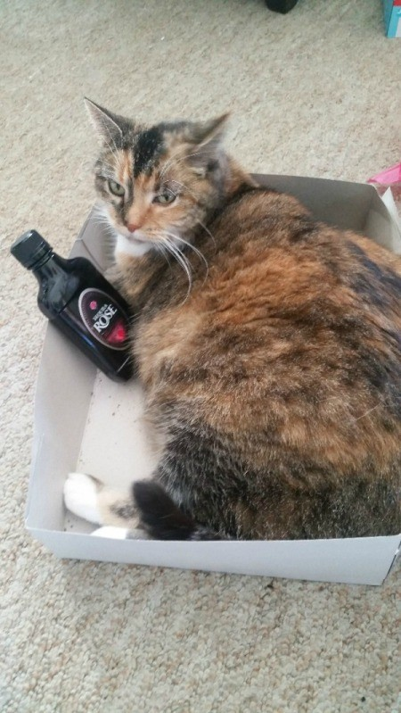 Cat Is Scratching Herself Raw - calico cat lying in a cardboard box