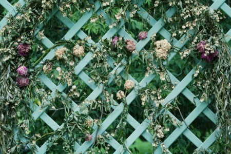 A garden trellis with flowers growing in it.