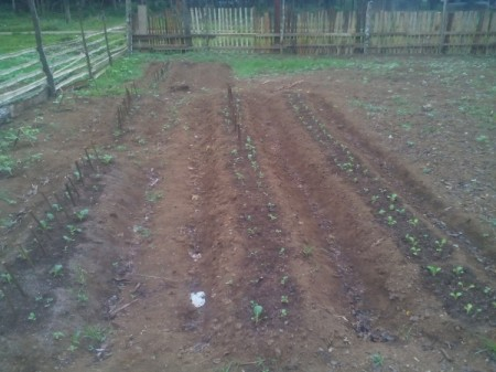 Growing Vegetable Seeds - garden plot