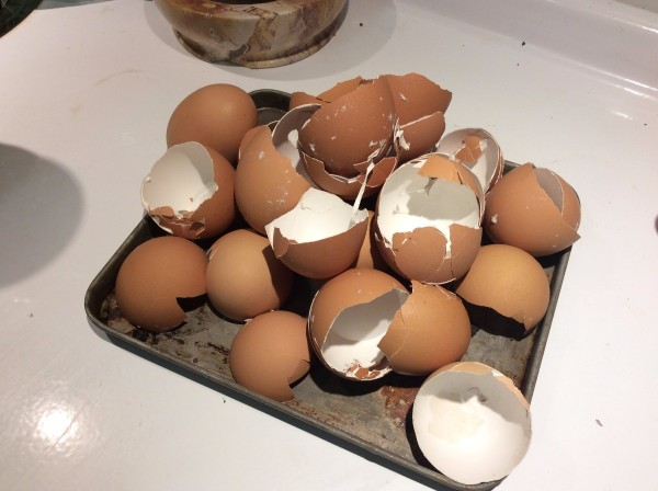 Eggshells for Your Garden - brown egg shells