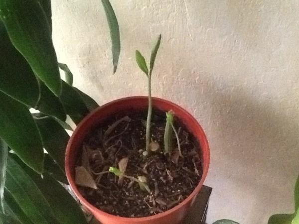 Growing Houseplants Thriftyfun