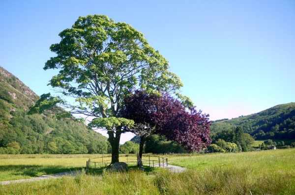 Trees marking the grave of the dog Gelert in Beddgelert, Wales.