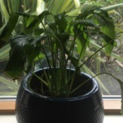 Identifying and Caring for a Houseplant