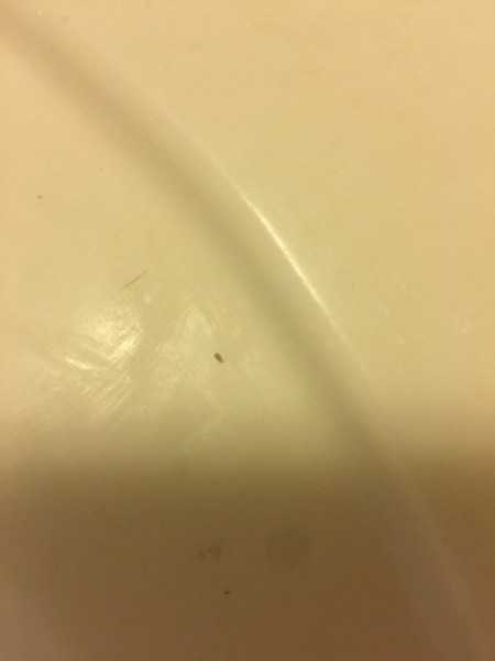 Tiny Black and White Biting Bugs - tiny bug
