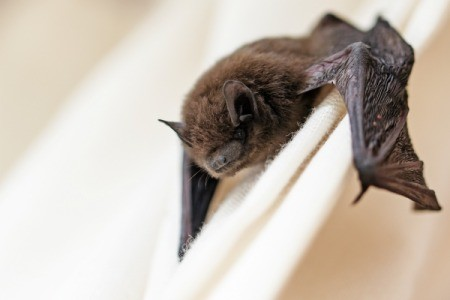 how to get rid of bats out of your attic