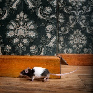 Mouse in a House