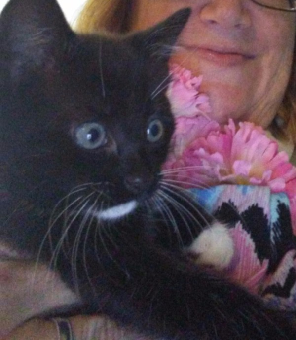 Use Flowers to Identify Gender of Foster Kittens - black female kitten with pink flowers
