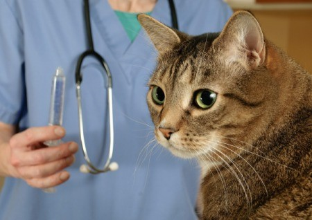 A cat seeing a veterinarian.