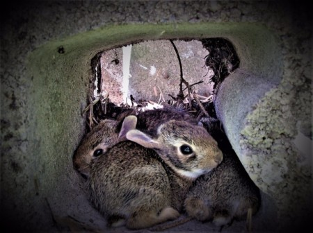 A Bunny Hide-out - Bunnies inside of a cinder block