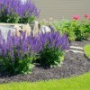 A beautiful landscape design utilizing perennial plants.