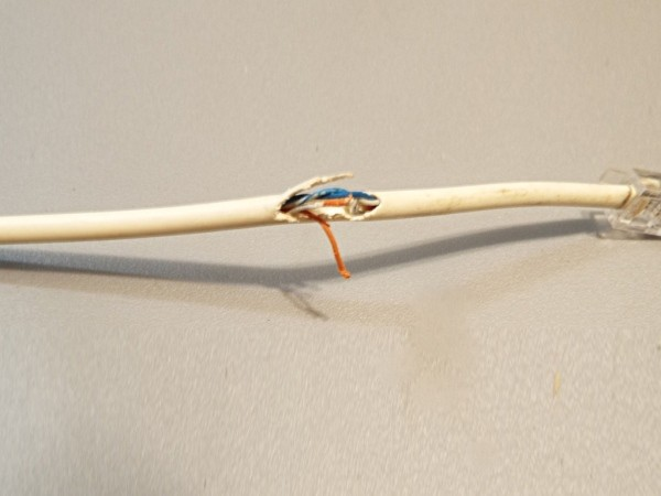 A data cable for a computer with a large torn spot, exposing the wires.