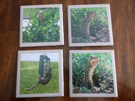 Picture Tile Coasters - chipmunk tiles