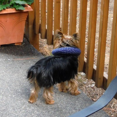 keeping your dog in your yard | thriftyfun
