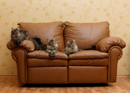 A cat on a leather couch.