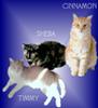 Cinnamon, Sheba, Timmy, and Sharon