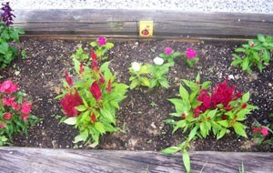 How To Make A Beautiful Flower Bed