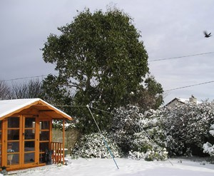 Summer House To Replace Unsightly Bush