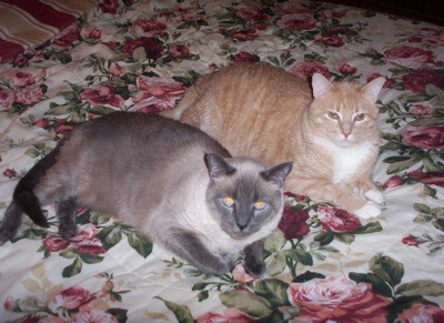 White Paws, Blue Eyes, Missy And Diggs (Cats)