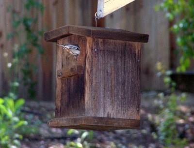 Las ventajas de las casas del pájaro - el cocinero que cultiva un huerto
