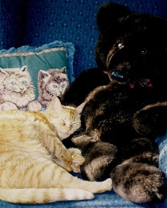 In Memory Of Ginger Snap (Cat)