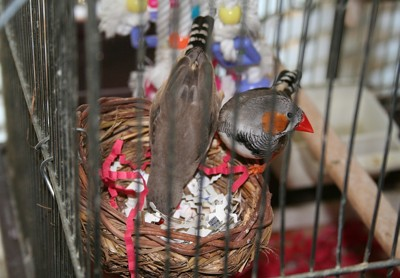 Our Finches