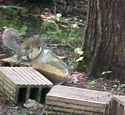 the_hungry_squirrel.jpg
