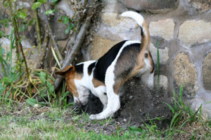 Keeping Dogs from Digging