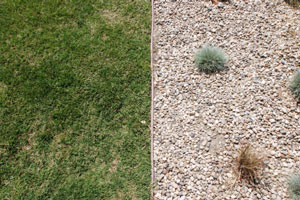 Killing Grass in Rock Ground Cover