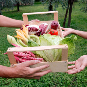 Plant a row for the hungry thriftyfun for American second harvest