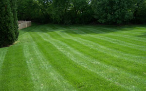 Our Lawn After Fertilizing And Reseeding