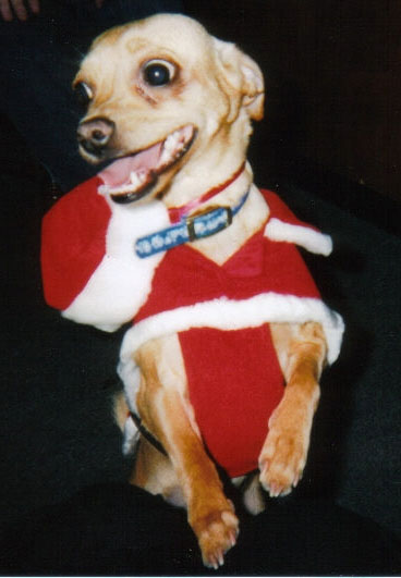Sable's Christmas Picture