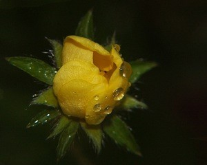 Scenery: Flower With Raindrops