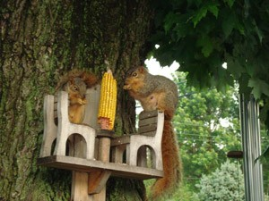 Wildlife: Squirrel Photos