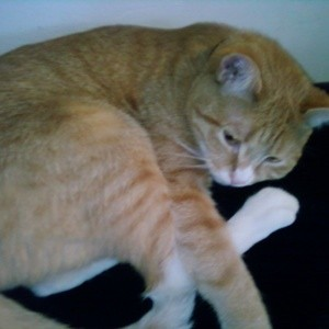 cat sanctuary jacksonville