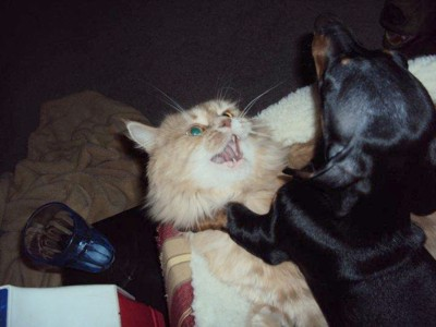 Funny Dog Choking The Cat Thriftyfun