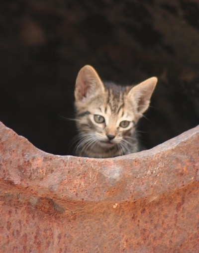 Wildlife: Kittens (Mexico)