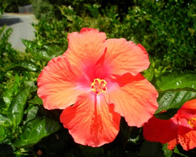 Scenery: Florida Flowers