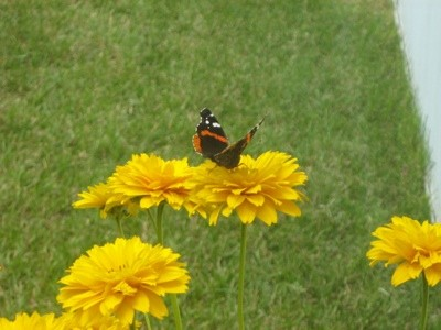 Garden: Butterfly On Flower