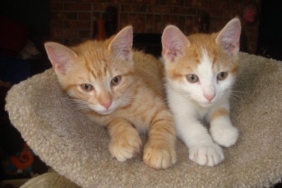 Sonny and Quincy (Kittens)
