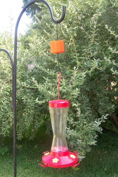 Keeping Ants Out Of Hummingbird Feeders