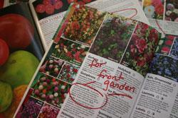 Ordering From Garden Catalogs