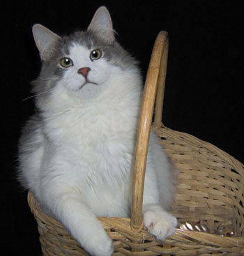 Miles in a Basket (Cat)